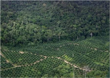 Palm oil 5